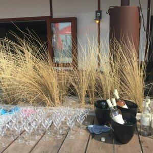 Wijn aan Zee image 2