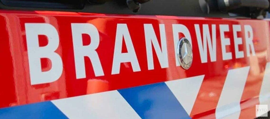 Honden en katten gewond bij woningbrand in Haarlem