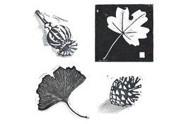 Workshop botanische printen ontwerpen en drukken