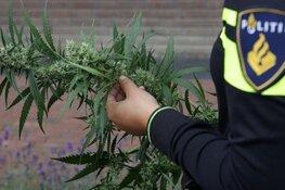 Politie en douane kammen loodsen in haven IJmuiden uit: wietplantage ontdekt