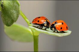 Speuren naar insecten op 't Koetshuijs