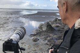 Van meeuwen tot strandlopers: fotograaf Sijmen legt 'de mooiste vogels van de Noordzee' vast