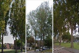 Nog eens 49 Schalkwijkse bomen gered van de zaag