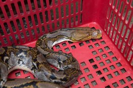 Oproep World Animal Protection: verbied de handel in wilde dieren